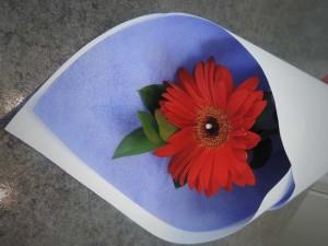 shopflowers0012