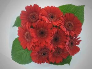 shopflowers0030