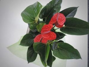 shopflowers0031
